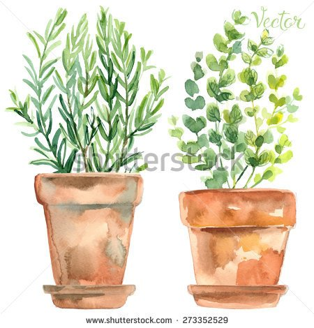 stock-vector-herbs-in-a-flowerpot-oregano-in-a-pot-rosemary-in-a-pot-herbs-painted-with-watercolors-on-white-273352529
