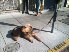 12230319-dog-tied-to-pole-photo